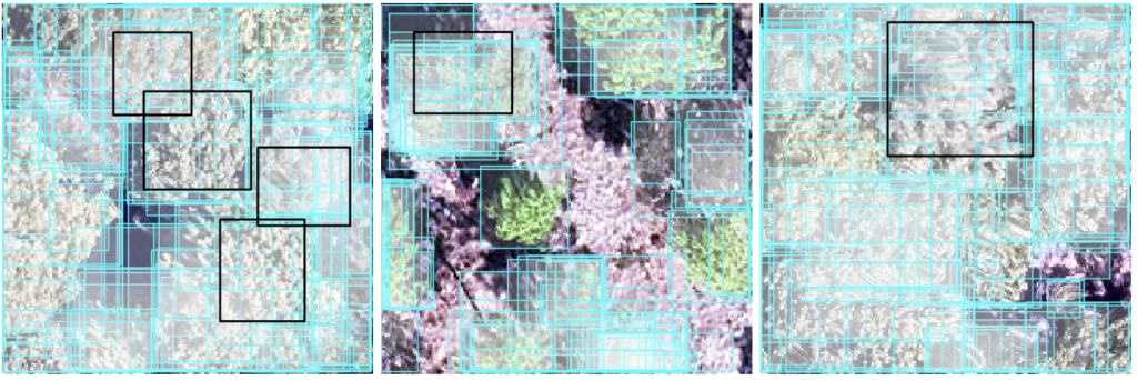3 images of RGB plots overlaid with crown delinations
